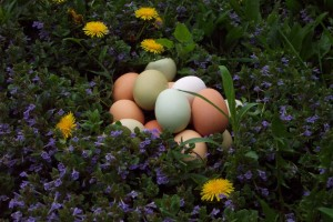 Egg-page-1-1024x682