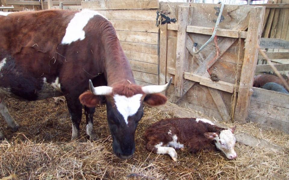 Farm-Boston-2008-008-1024×682