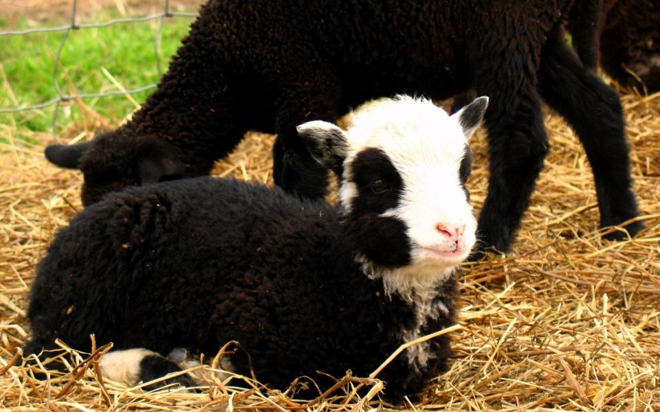 Rebecca's Farm Photos 022